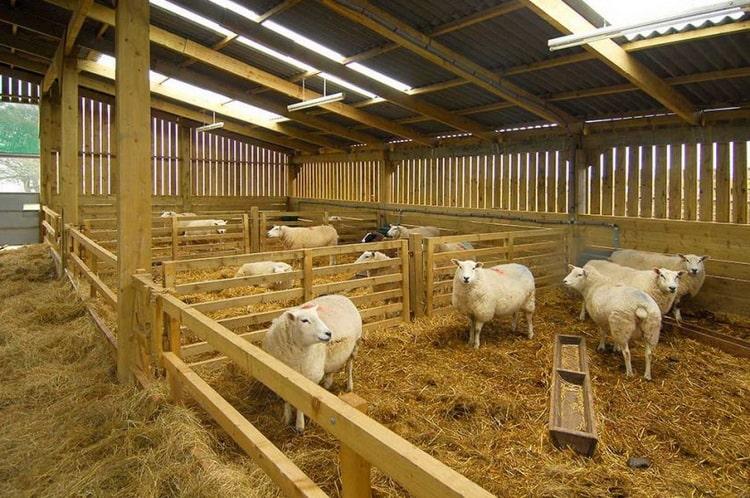Мини ферма по разведению скота