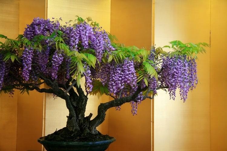 выращивание_редких_домашних_растений